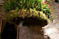 Flowers-Temps-de-Flors-Girona
